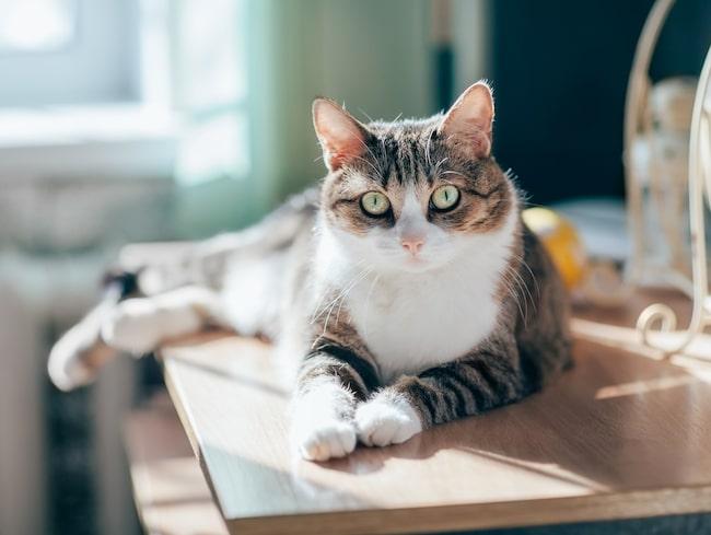 I dag finns det omkring 100 000 hemlösa katter i Sverige.