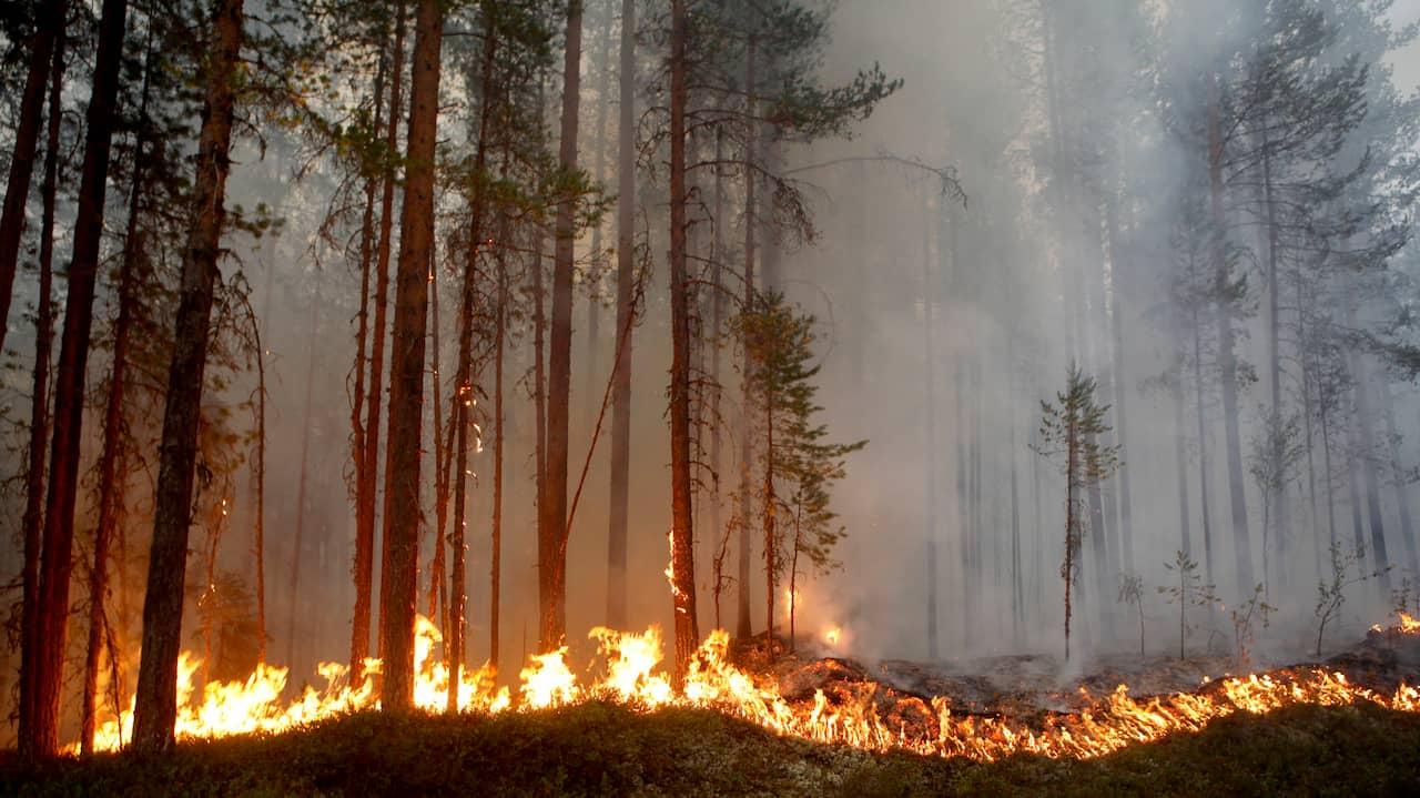 Räddningstjänsten utfärdar eldningsförbud