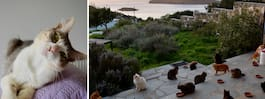 Häng med katter på en grekisk paradisö – och få lön