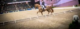 Stockholm International Horse Show 17 – allt du behöver veta
