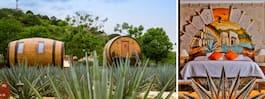 Det perfekta hotellet för alla som älskar tequila