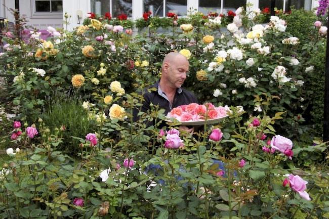 Håkan i sitt rosenparadis. Här tillbringar han så mycket tid han bara kan under sommardagarna – och kvällarna. Se fler bilder från Håkans fantastiska trädgård i bildspelet nedan till höger!