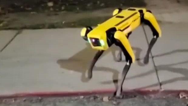 """Här stöter de på en robothund: """"Kusligt"""""""