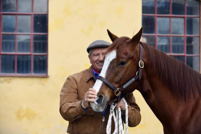 Åttaårige skönheten Sterling, quarterhäst som kommer från Monty Roberts hjordar, hade åkt över bron till Flyinge från Køge i Danmark, med sin stolta ägare Charlotte Stjernfelt. Foto: Lasse Svensson