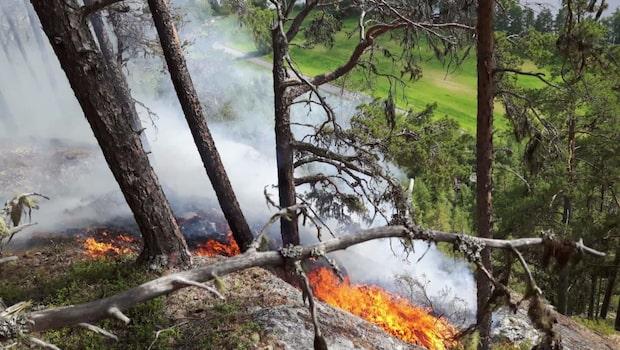 Skogsbränder på flera ställen i Sverige