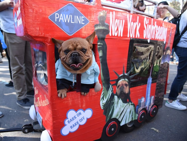 250 hundar klädde ut sig i Tompkins Square Halloween Dog Parade i New York.