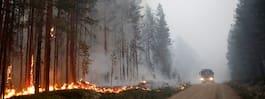 Skog för 600 miljoner har gått upp i rök