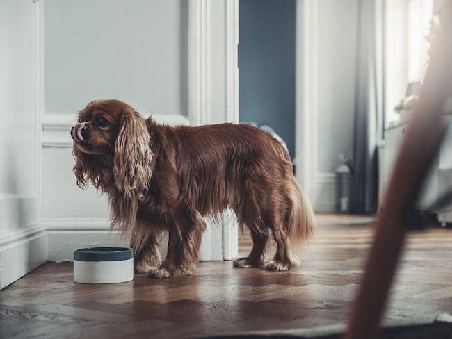 Hundskål i stengods Från Denjo dogs i samarbete med populära porslinsmärket Mateus.