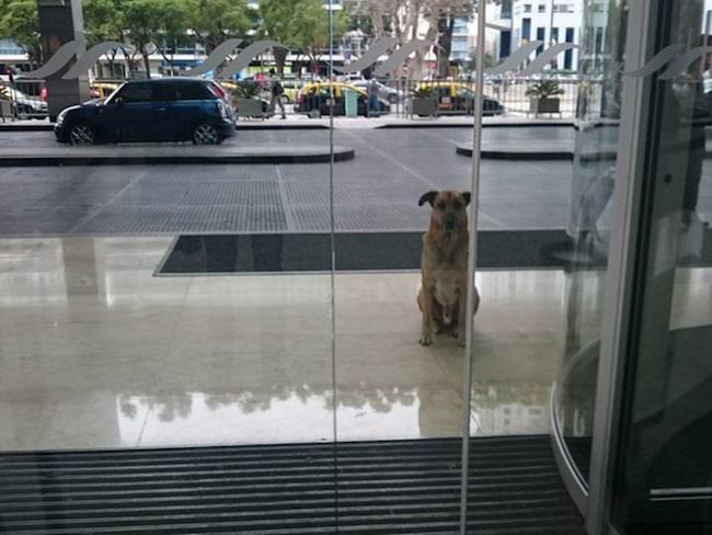 <span>Han gav honom lite mat, klappade honom och reste hem igen. Nästa gång hon kom tillbaka satt hunden utanför hotellet och väntade på henne.<br></span>