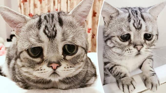 Katten Luhu och matten Maggie bor i Kina. Foto: Instagram
