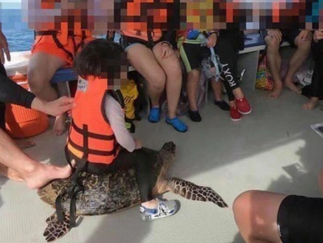 Fotot på barnet som rider på en utrotningshotad havssköldpaddas rygg har väckt avsky på sociala medier.
