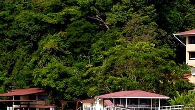 Tropiska skogen i Panama bommar på grund av utsläppen