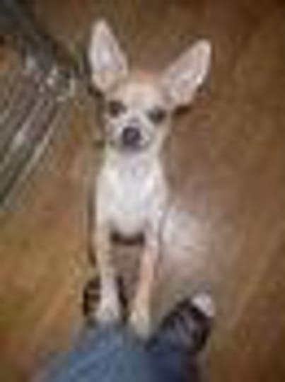 23 mord pa ett dygn i chihuahua
