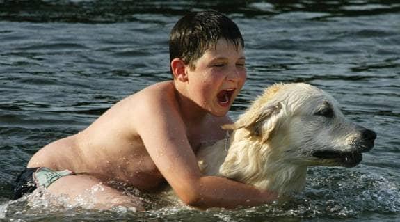 Golden retrievern är en utmärkt hund för familjer med barn. Foto: AP