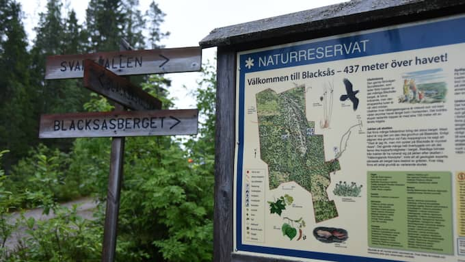 I Blaksåsbergets naturreservat är terrängen svår med stup och djup skog. Foto: Daniel Sjöholm
