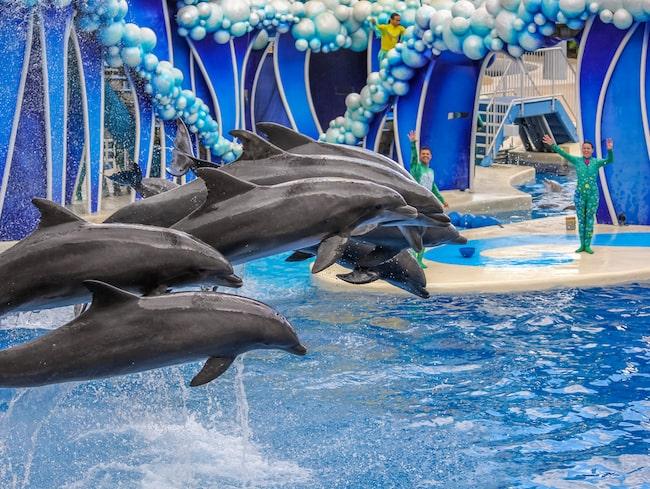 Delfinshowen är en stor publikdragare.