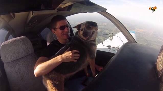 Här flyger planet – och hunden får sitta i cockpit. Foto: Expressen TV