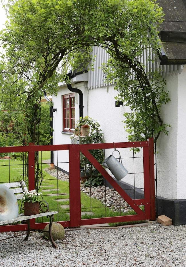 Pittoresk entré till Annas hem i Vellinge. Ovanför grinden klättrar en honungsros.