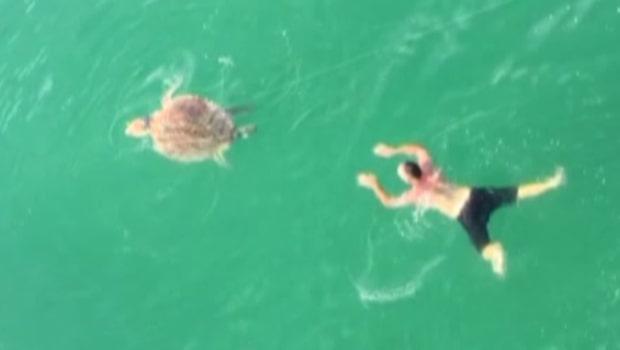 Sköldpaddan fast på fiskekroken