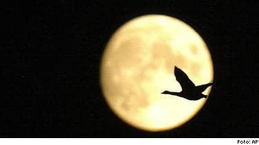 I natt är det fullmåne - så här tror forskarna att det påverkar oss.