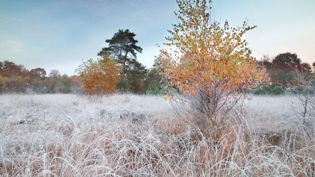Fortsatt kallt för årstiden – men mildare till helgen