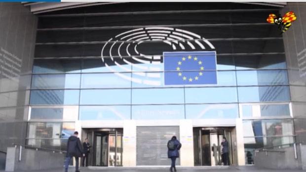Demoskop: De frågorna är viktigast för väljarna i EU-valet