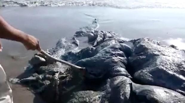 Okänd varelse spolades upp på stranden