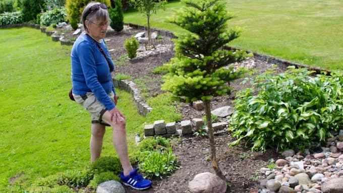 """Det här trädet har kaninerna glatt tuggat i sig av. """"Det är ett stort problem, jag hade hoppats att kommunen kunde hjälpa till"""", säger Ida Bäckström som har problem med kanininvasionen i sin trädgård. Foto: Malin Nilson/Värnamo Nyheter"""