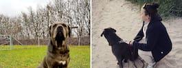Hunden Berit, 2, förgiftade  – nu varnas andra hundägare