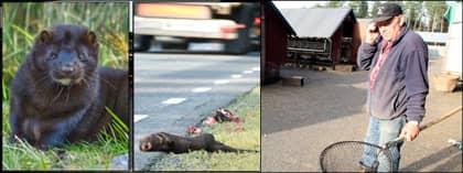 Tusentals av Bengt Svensson i Skillingaryds cirka 18 000 djur är nu döda. Foto: SVEN MAGNUSSON och LARS ANDERSSON