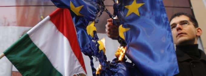Elod Novak, parlamentsledamot för det ungerska nationalistpartiet Jobbik bränner en EU-flagga. Foto: Bernadett Szabo