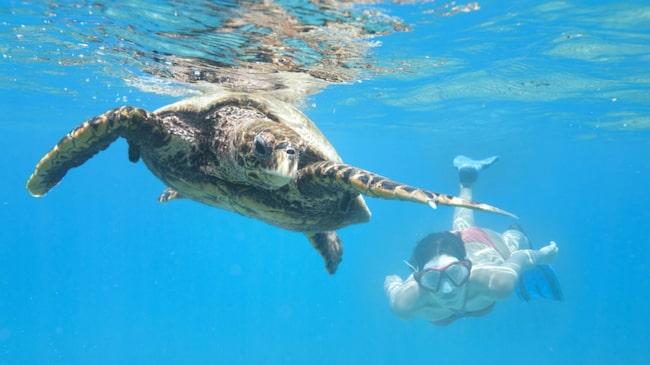 Seychellerna – sinnebilden av paradiset både ovan och under havsytan.