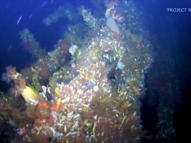 Skeppsvraket hittades efter 75 år