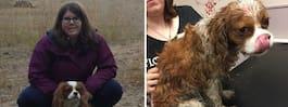 Mirakelhunden Alfons överlevde hundattack