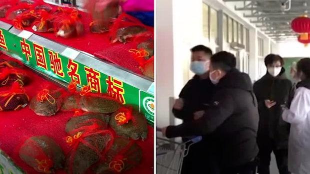Förbud mot att äta vilda djur i kinesiska Wuhan
