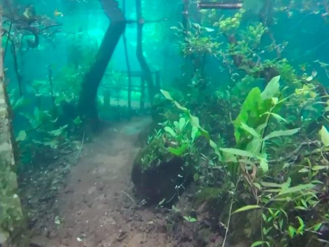 Rio da Pratas naturreservat ligger i Brasilien – och är översvämmat.