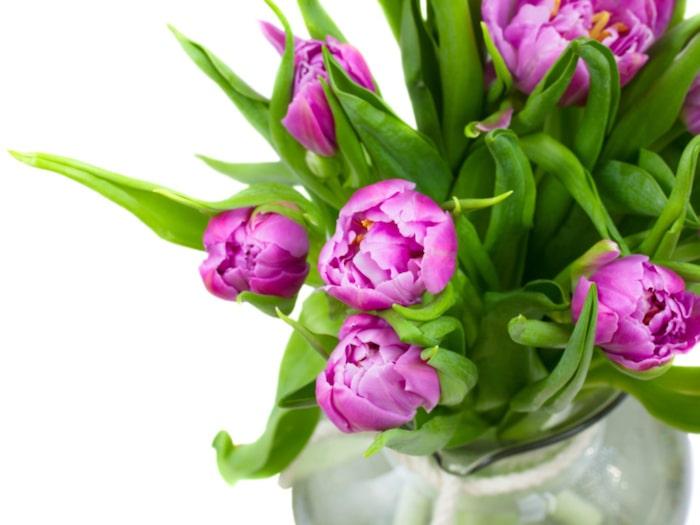 vit orkide betydelse