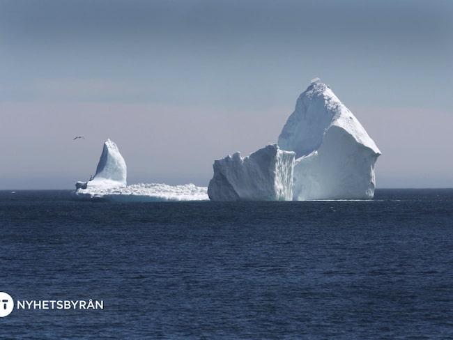 Ett isberg ställer till med trafikstockning när turisterna invaderar en liten kuststad i Kanada.