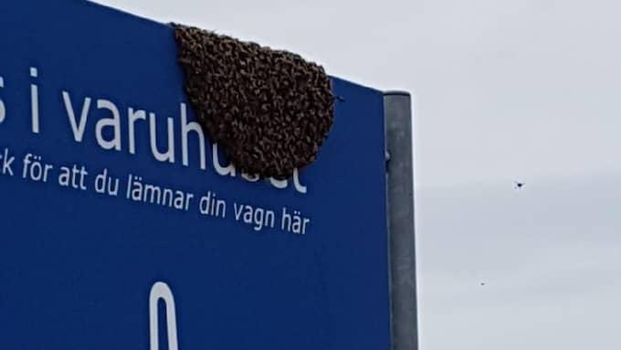 Eva-Sofia Gustavsson möttes av en ovanlig syn på Ikea i Kållered. Foto: Privat