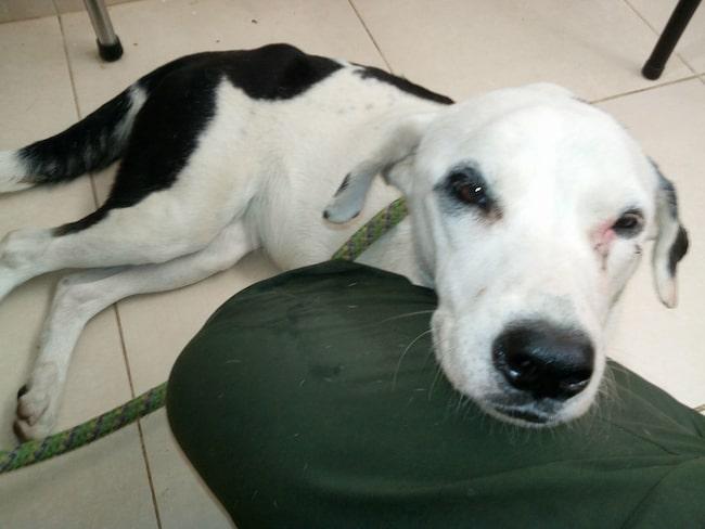 Den första månaden gick hunden runt på flygplatsen och letade efter sin ägare.