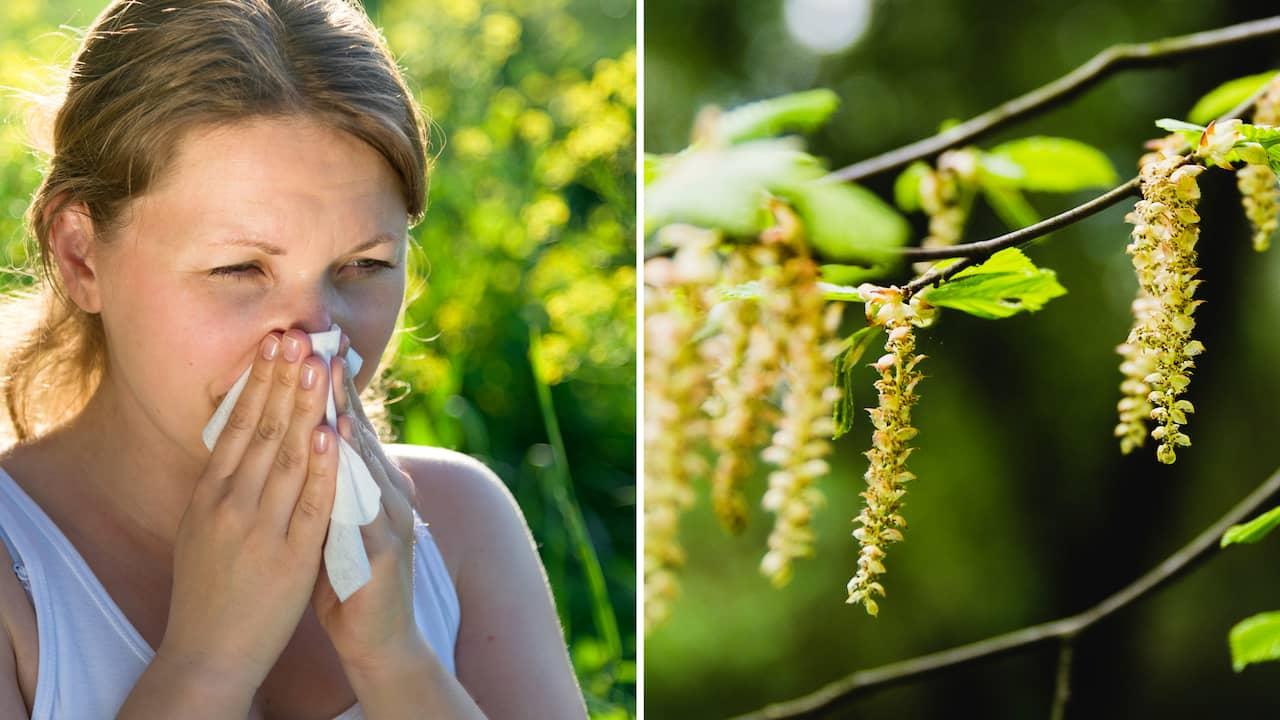 pollenallergi hosta medicin