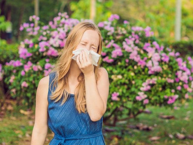 pollenallergi symptom feber