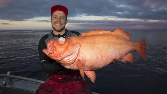 Erik Axner drog upp en enorm kungsfisk. Foto: Privat