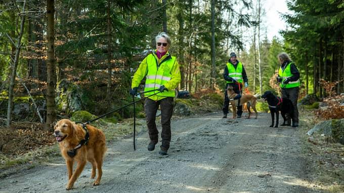 I april i år sökte Missing People vid sjön Immeln i nordöstra Skåne efter spår av Lelle Hildebrand. På polisens önskan. Foto: PEO MÖLLER