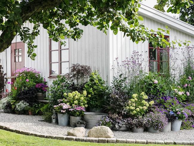 """""""Jag tycker att det är väldigt mysigt vid boden och den lilla bänken, där har jag bra utsikt över trädgården samtidigt som det är lä"""", säger Karolina."""
