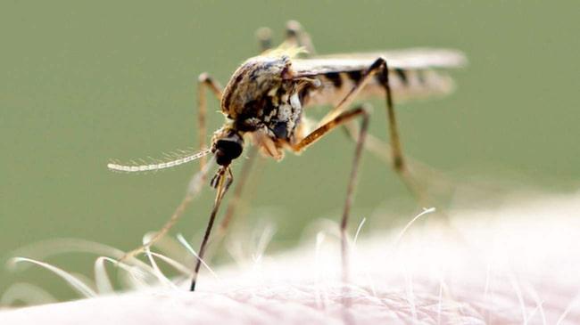 antihistamin mot myggbett