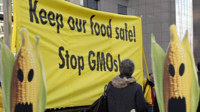 Klimataktivister bör omfamna genetiken. Foto: Thierry Charlier / AP TT / NTB SCANPIX