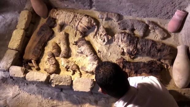 Kattmumier hittade i egyptiska kryptor