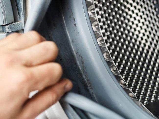 Börja med att rengöra tvättmedelsfacken från synligt mögel. Även insidan av luckan och gummilisten på tvättmaskinen behöver rengöras.