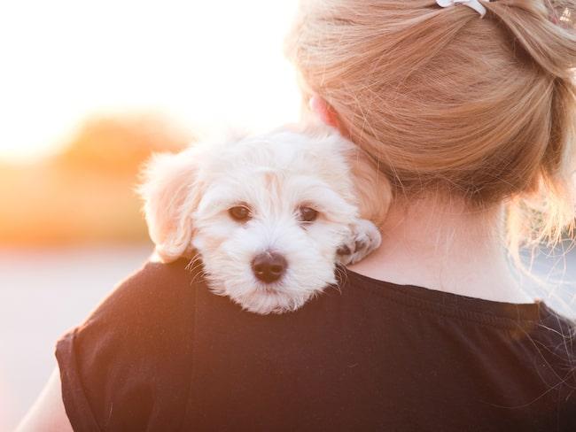 Säg den som inte älskar sitt husdjur och vill den väl? Men har du kolla på allt du har där hemma? En hel saker kan vara direkt livsfarliga för din eller dina fyrbenta älsklingar.